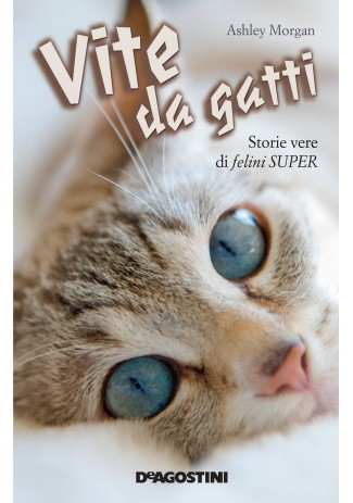 eBook: Vite da gatti