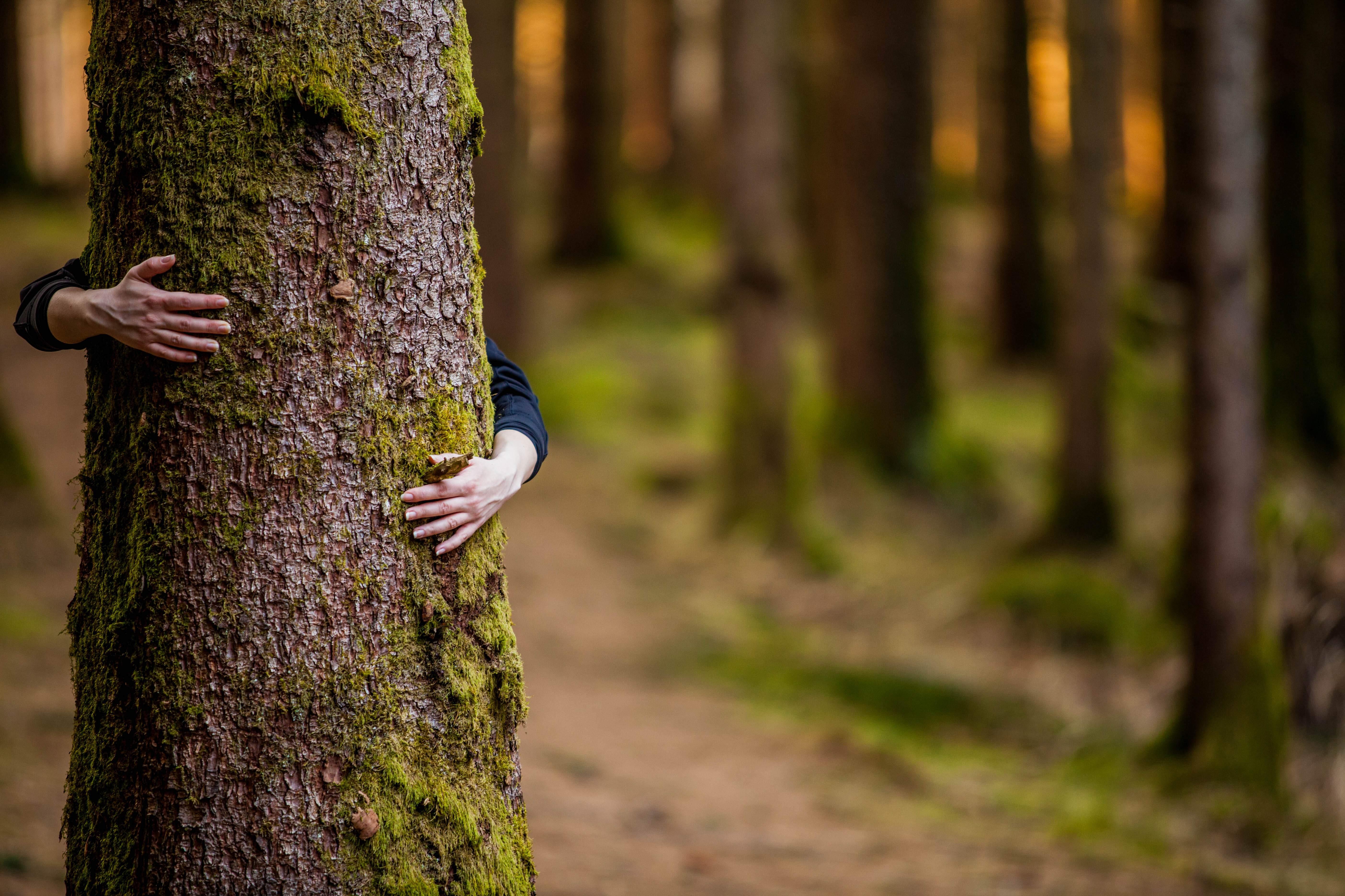 Donna che abbraccia un albero