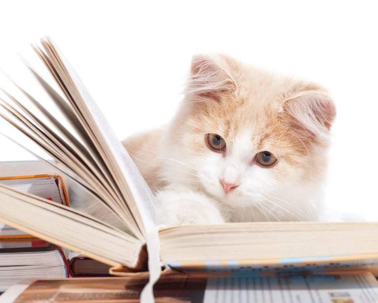 gattino che legge un libro