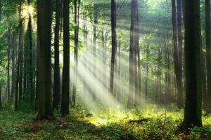 Foresta verde, natura